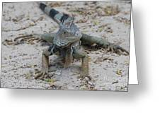 Amazing Iguana With A Striped Tail On A Beach Greeting Card