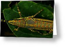 Amazing Insect Greeting Card