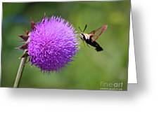 Amazing Insects - Hummingbird Moth Greeting Card