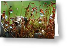 Amazing Jungle Of The Microcosm Greeting Card