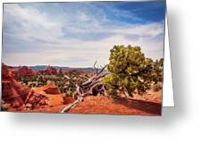 Amazing Juniper Tree At Kodachrome Basin State Park Greeting Card