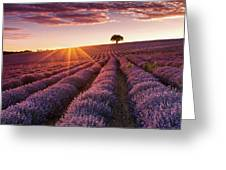 Amazing Lavender Field At Sunset Greeting Card