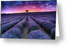 Amazing Lavender Field With A Tree Greeting Card