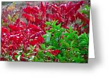 Amazing Nature Blessings Magic Colors Cherry Red Green Shrubs Plants Save  The Environment Greeting Card