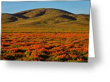 Amazing Poppy Fields Greeting Card