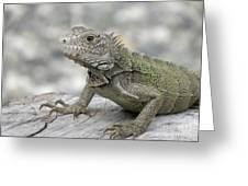 Amazing Posing Gray Iguana Perched On A Log Greeting Card