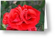 Amazing Rose Greeting Card