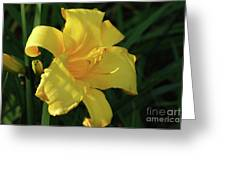 Amazing Yellow Lily Flowering In A Garden Greeting Card
