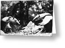 Amazon: Anteater Greeting Card