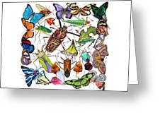 Amazon Insects Greeting Card