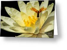 Amber Dragonfly Dancer Too Greeting Card