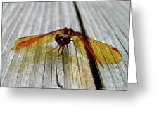 Amber Dragonfly Greeting Card