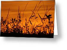 Amber Sundown Meadow Grass Silhouette  Greeting Card
