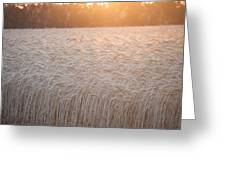 Amber Waves Of Grain Greeting Card