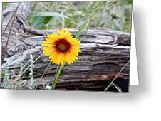Amber Wheels Blanket Flower Greeting Card