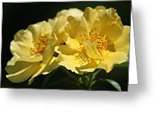 Amber Yellow Country Rose Greeting Card