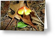 Amberina Mushroom - Tiny Jewel In The Forest Greeting Card