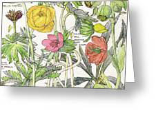 Ambrosia Vi Greeting Card