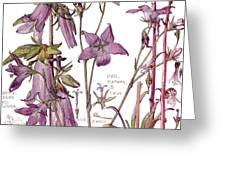 Ambrosia Vii Greeting Card