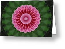 America Climbing Rose Kaleidoscope Greeting Card