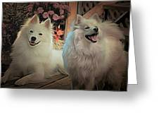 Americain Eskimo Greeting Card