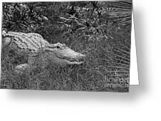 American Alligator 2 Bw Greeting Card