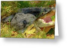 American Alligator Arizona Chapter Greeting Card