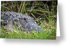 American Alligator Greeting Card