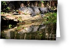 American Alligator With Caterpillar Greeting Card