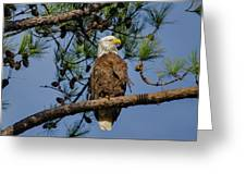 American Bald Eagle 2 Greeting Card