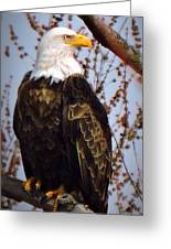 American Bald Eagle - Iowa Greeting Card