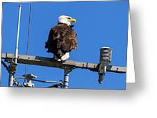 American Bald Eagle On Communication Tower Greeting Card