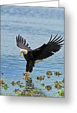 American Bald Eagle Sets Down On Fish Greeting Card