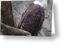 American Bald Eagle Greeting Card