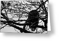 American Bald Eagle Greeting Card