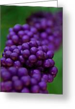 American Beautyberry Greeting Card
