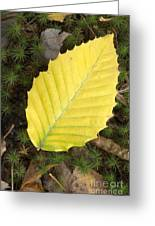 American Beech Leaf Greeting Card