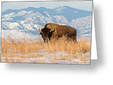 American Bison In Front Of The Rocky Mountains Greeting Card