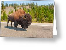 American Bison Sharing The Road In Yellowstone Greeting Card