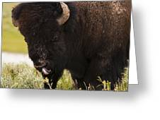 American Bison Tongue Greeting Card