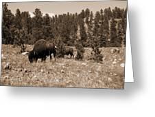 American Bison Vintage Greeting Card