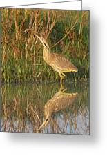 American Bittern Along The Shore Greeting Card