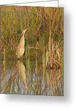 American Bittern Close To Shore Greeting Card