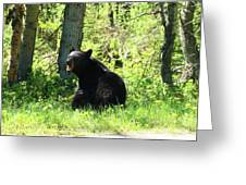 American Black Bear Greeting Card