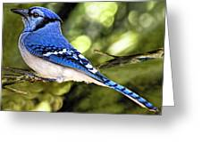Blue Jay Bokeh Greeting Card