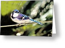 American Blue Jay On Alert Greeting Card