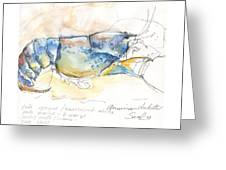 American Blue Lobster Greeting Card