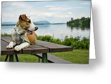 American Breed On Table Greeting Card
