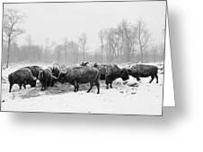 American Buffalo #2 Greeting Card