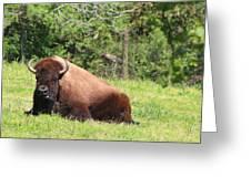 American Buffalo Greeting Card